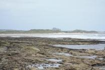Bamburgh Castle rears over the sand dunes