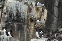 A few gulls join the mix