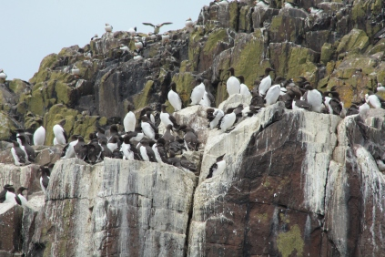 Each guillemot female gives birth to an egg with a unique pattern which helps the parents to identify it