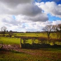 Anglesey countryside near the town of Llanfairpwllgwyngyllgogerychwyrndrobwllllantysiliogogogoch