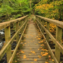 Autumn in the Aber Valley