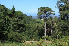 Monserrate Valley